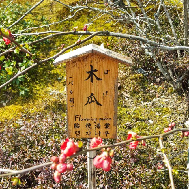 Houten plantenlabel huisje. Inspiratie voor de Japonais collectie. Temple garden plant label Kyoto.