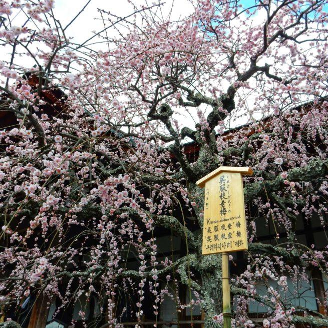 Houten huisje plantenlabel uit de Zen Tuin in Kyoto, Japan